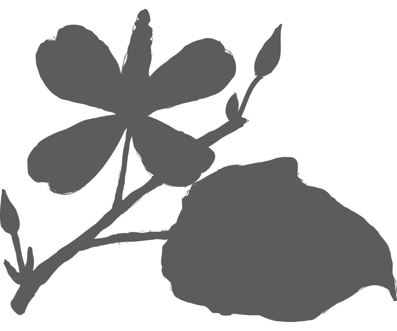 Ingredient for Organic Dokudami (Houttuynia cordata)