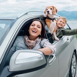 a couple driving with their dogs