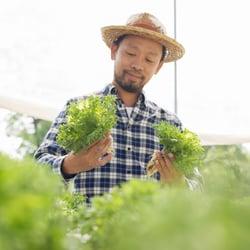 It's Easy & Absorbable – Man choosing organic lettuce at an outdoor farmers market