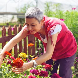 Potent Antioxidant Action – Older woman cutting flowers in garden