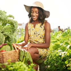 Helps the Liver – Woman picking organic vegetables at a farm